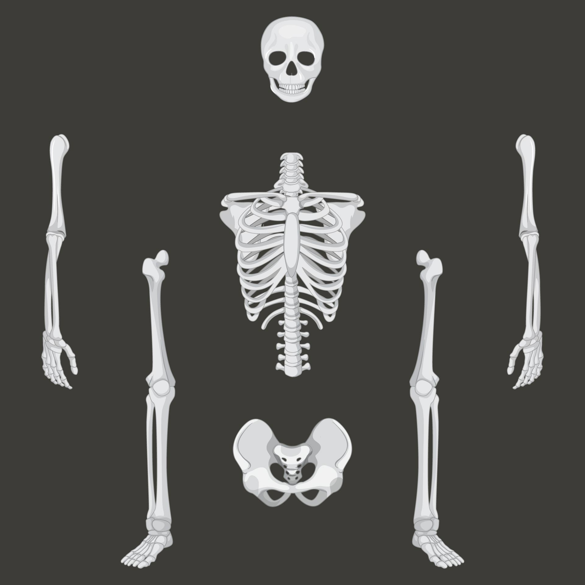 Halloween Printable Skeleton Parts
