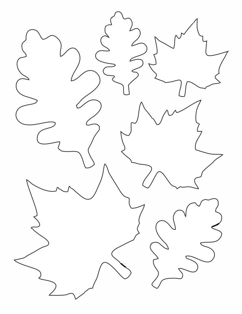 6 Best Paper Printable Leaf Patterns Printablee Com