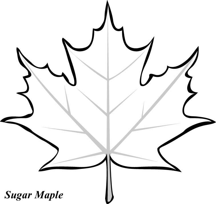 Leaf Tracers Printable